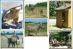 Safari Wildlife Park.JPG